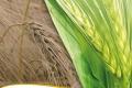 folder_ernaehrungssicherung2012-15