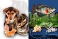 Tierliebe im Alltag
