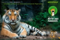 greenpeace_tigerdichrein_a3_strategydesign